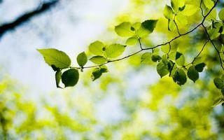 Photo free bokeh wallpapers, plants, tree