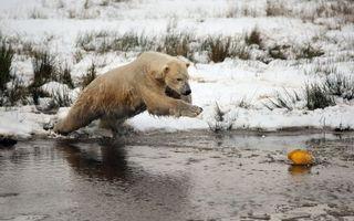 Фото бесплатно зима, снег, медведь