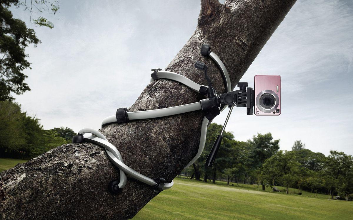 Фото бесплатно деревья, трава, фотоаппарат - на рабочий стол