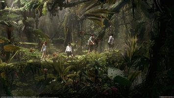 Фото бесплатно джунгли, деревья, листья