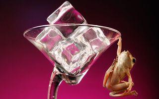 Фото бесплатно фужер, стекло, лед, кубики, лягушка, морда, лапы