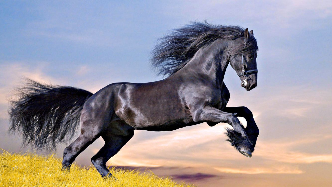 Фото бесплатно конь, и больше, никого - на рабочий стол