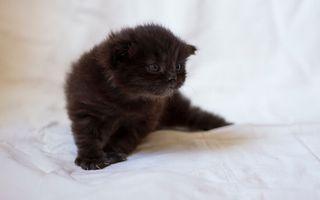 Бесплатные фото котенок,черный,морда,глаза,лапы,когти,кошки