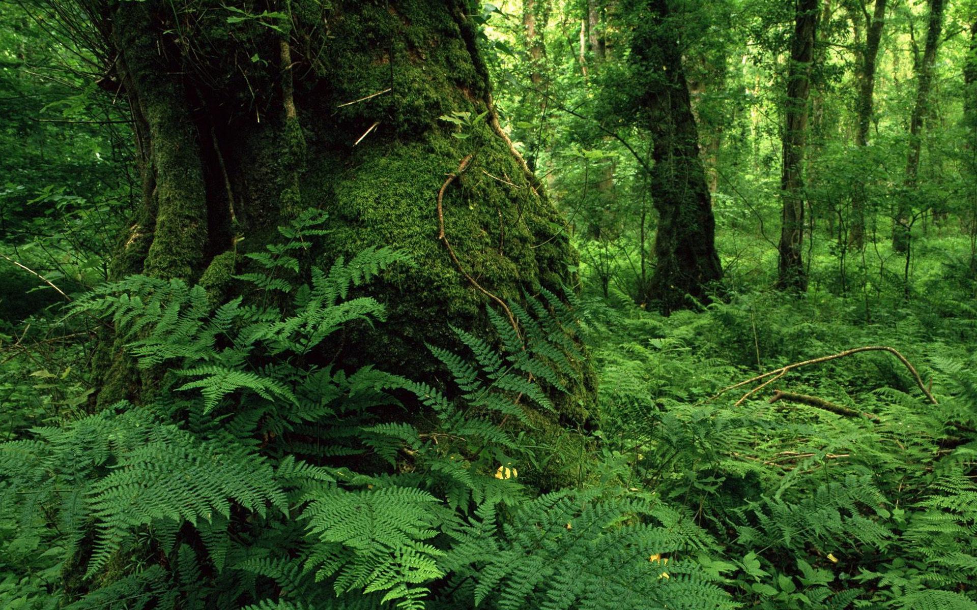 лес, деревья, мох