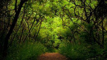 Бесплатные фото лес,деревья,трава,зелень,кусты,тропа,дорога