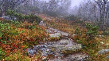Бесплатные фото лес,деревья,туман,камни,дорожка,кусты,природа