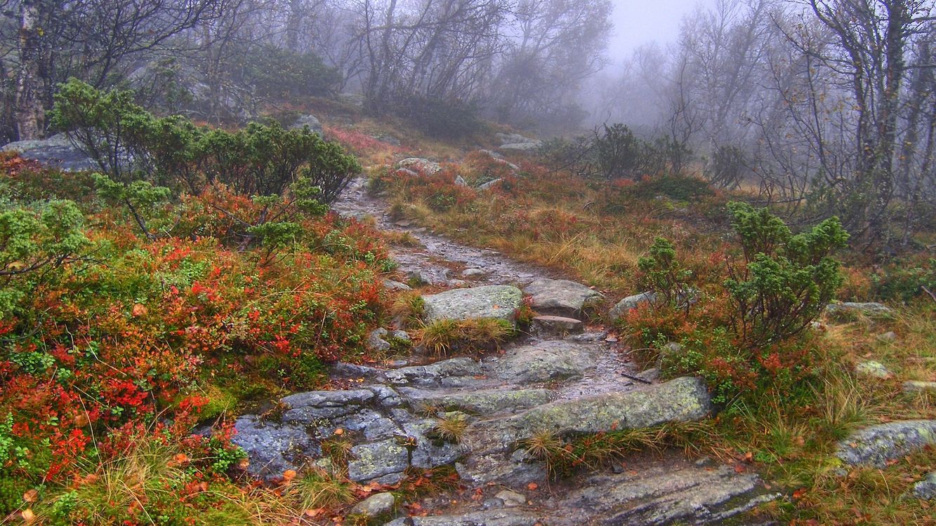 Фото бесплатно лес, деревья, туман, камни, дорожка, кусты, природа, природа