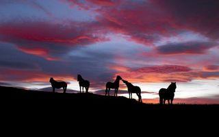 Заставки лошади,кони,пасутся,семья,стадо,свобода,дикие