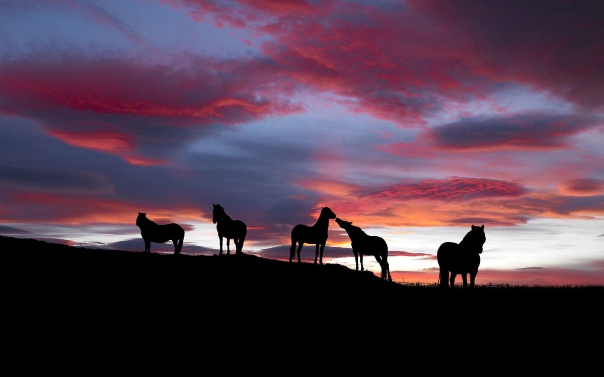 Обои лошади, кони, пасутся картинки на телефон
