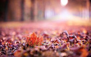 Фото бесплатно осень, листва, сухая