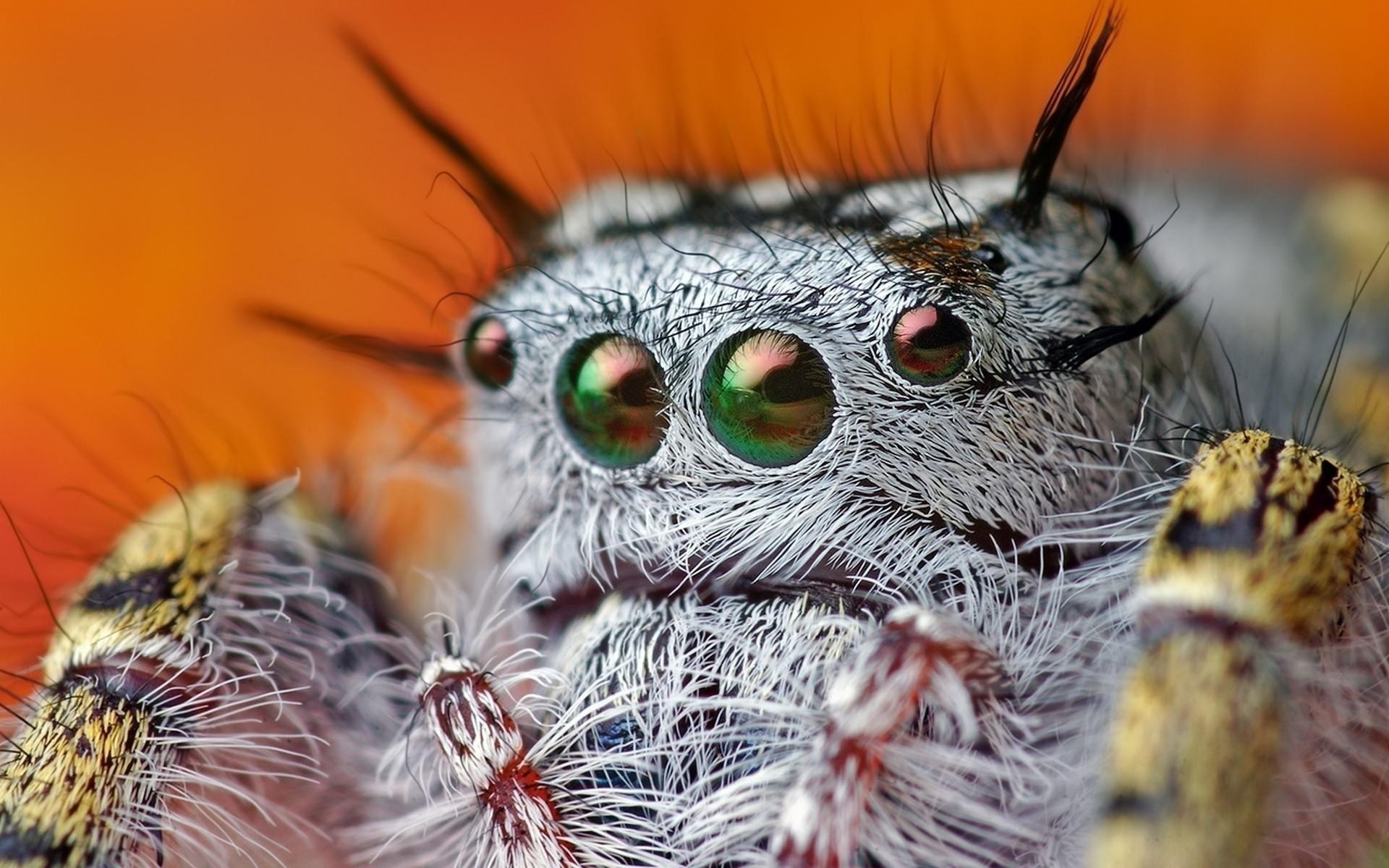 паук, волосы, глаза
