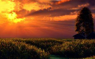 Бесплатные фото поле,рожь,солнце,лучи,тучи,облака,трава