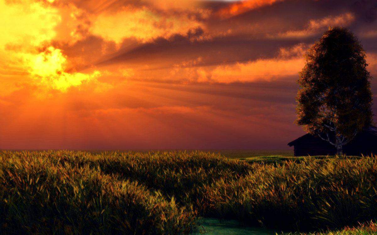 Free photo field, rye, sun - to desktop