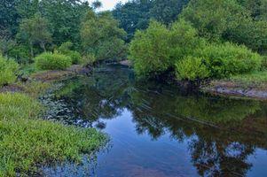 Бесплатные фото река, деревья, природа, природа