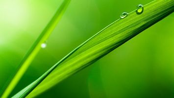 Обои трава, лист, зеленый, капли, роса, вода, природа