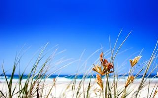 Photo free grass, beach, plants