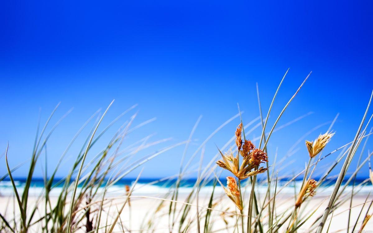 Фото бесплатно трава, пляж, растения - на рабочий стол