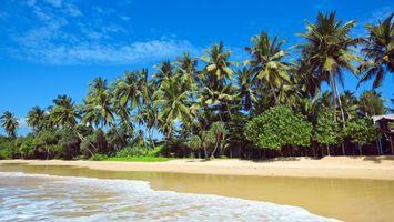 Фото бесплатно природа, тропики, море