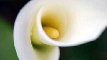 Бесплатные фото цветок,лепестки,тычинка,стебель,зелень,белый,желтый