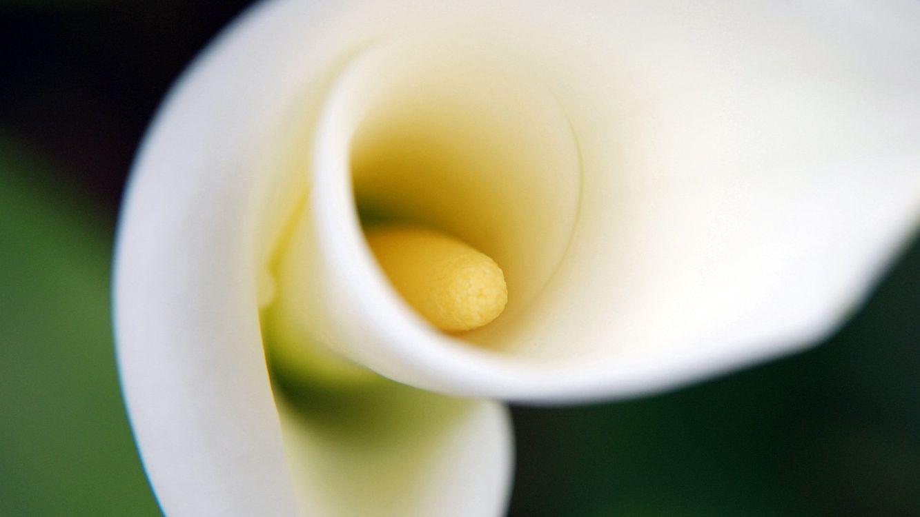 Фото бесплатно цветок, лепестки, тычинка, стебель, зелень, белый, желтый, макро, цветы, цветы