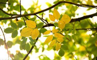 Бесплатные фото ветки,листья,желтые,зеленые,дерево,кора,природа