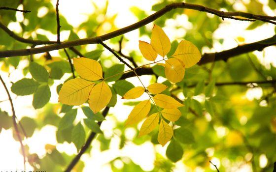 Фото бесплатно ветки, листья, желтые