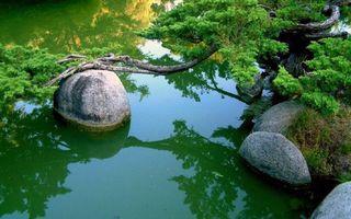 Фото бесплатно вода, камни, лианы