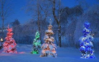Обои зима, лес, ёлки, вечер, разное