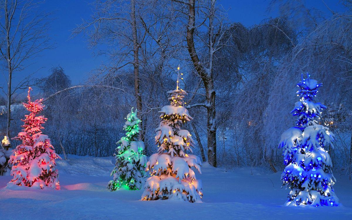Фото бесплатно зима, лес, ёлки, вечер, разное, разное