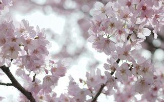 Фото бесплатно белые, цветение, цветы