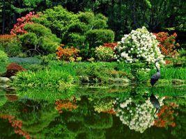 Фото бесплатно природа, вода, лес, растения, деревья