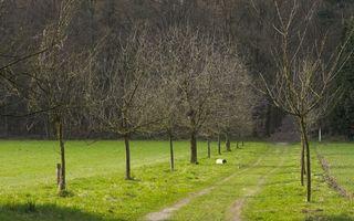 Фото бесплатно аллея, деревья, крона