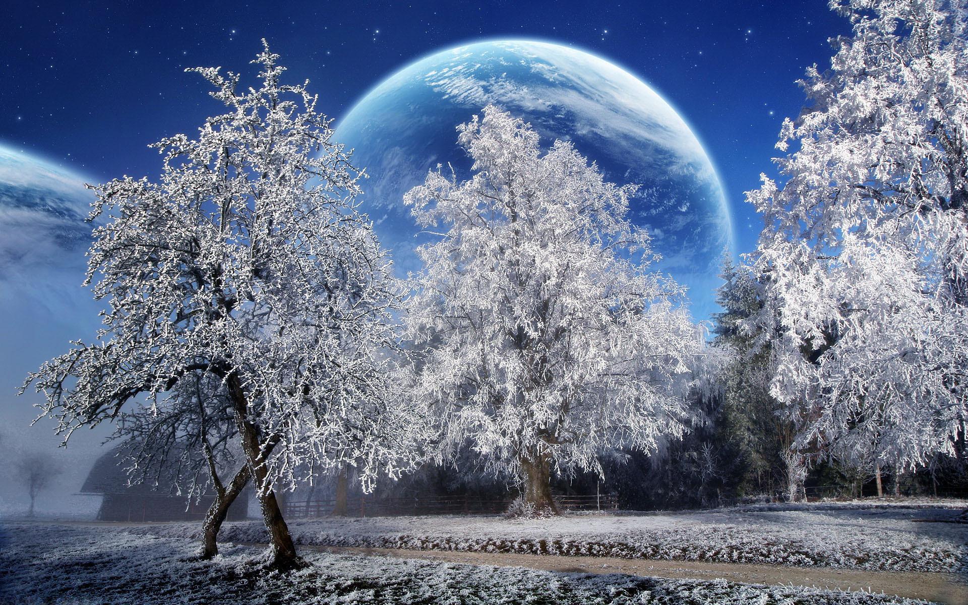 Обои деревья, зима, снег, изморозь