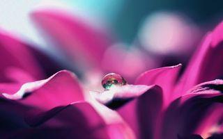 Фото бесплатно капля, вода, цветок