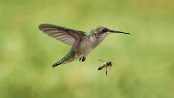 Photo free hummingbird, beak, wings