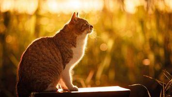 Бесплатные фото кошка,лапы,хвост,усы,уши,солнце,животные