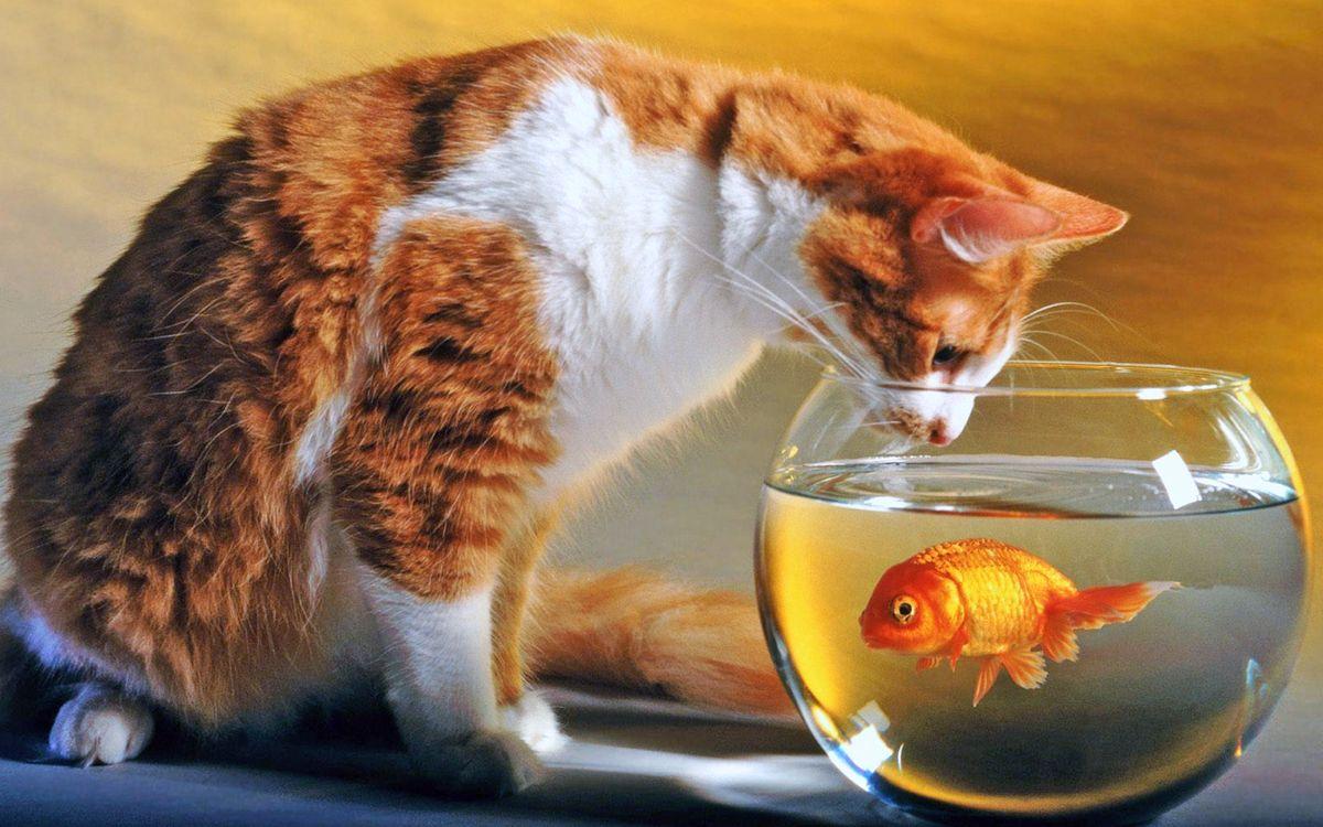 Обои кот, аквариум, рыба картинки на телефон