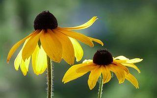 Бесплатные фото лепестки, большие, желтые, тычинки, стебли, зеленые, цветы