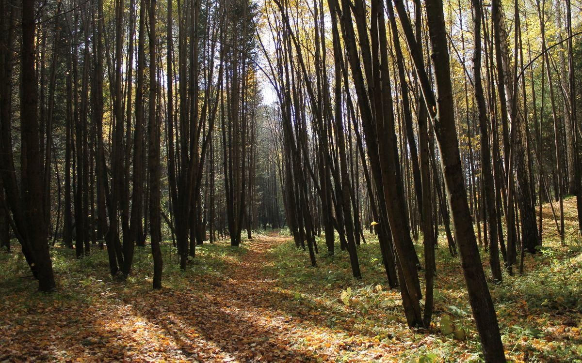 Фото бесплатно лес, деревья, осень, листва, трава, тропа, природа, природа