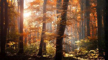 Бесплатные фото лес,деревья,осень,лучи,солнца,листья,листопад