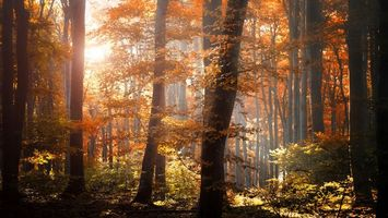 Photo free trees, rays, autumn
