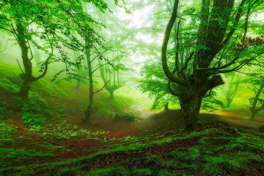 Бесплатно деревья, лес - фото красивые