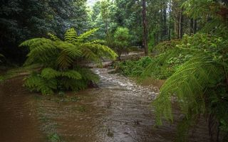 Бесплатные фото лес,река,деревья,кустарник,зеленый,трава,природа