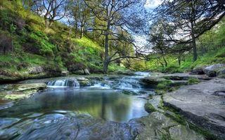 Бесплатные фото лес,деревья,ветки,зелень,река,вода,камни