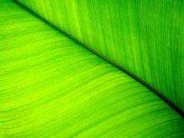 Бесплатные фото лист, зеленый, прожилки, макро, заставка, обои