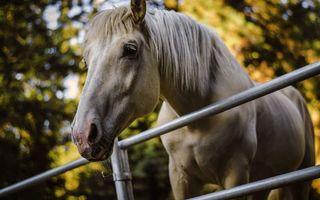 Обои лошадь, морда, глаза, шея, грива, забор, животные