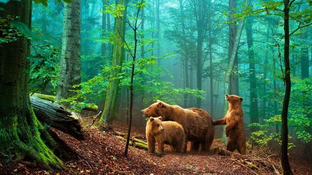 Photo free bear, family, forest
