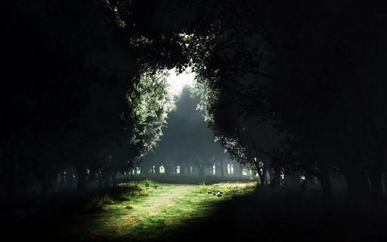 Фото бесплатно парк, лужайка, темный