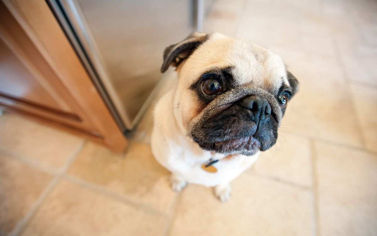 Free photo dog, puppy, eyes - to desktop