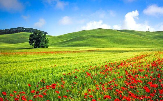 Фото бесплатно пейзаж, поле, цветы